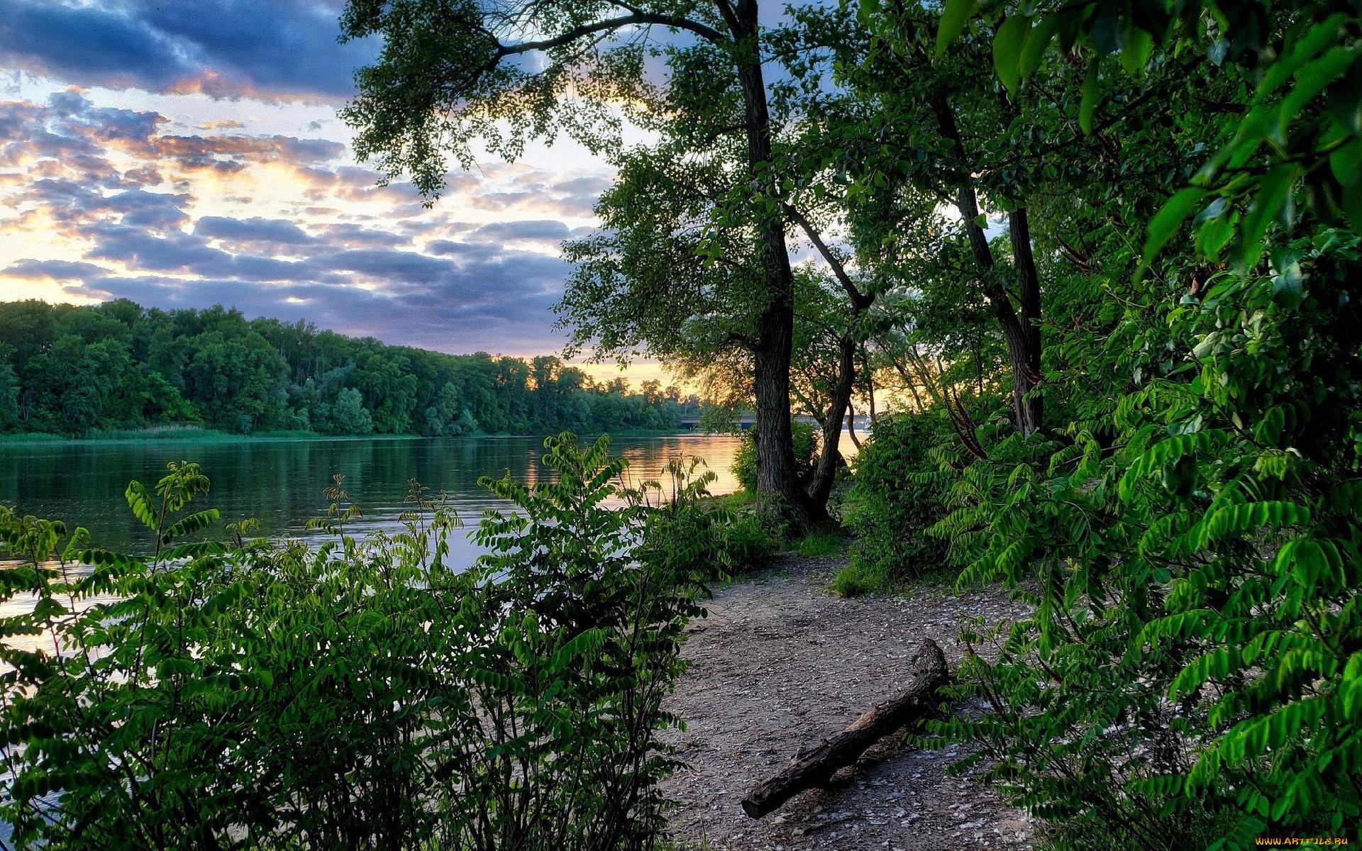тихая заводь картинки река озеро